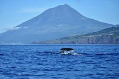 adufe-baleia